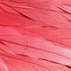 Watermelon Pink Rooster Feathers