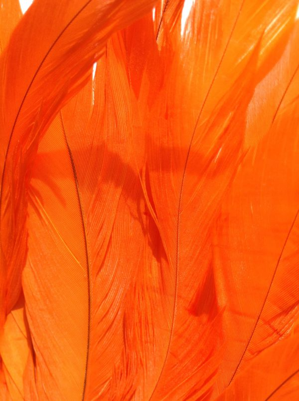 Bright Orange Rooster Feathers