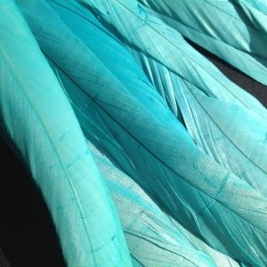 Aqua Rooster Feathers