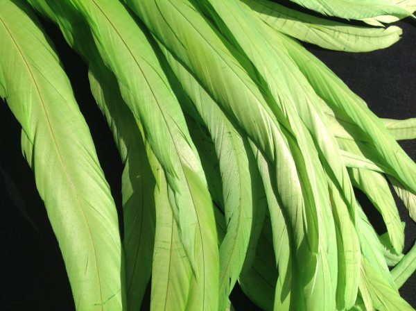 Chartreuse Green Rooster Feathers Long