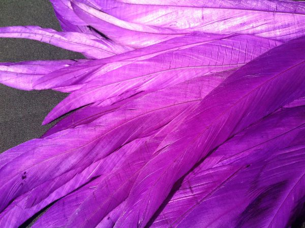 Violet Purple Rooster Feathers