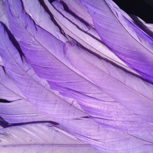 Lilac Purple Rooster Feathers