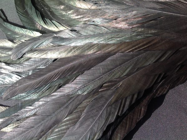 Black Rooster Feathers