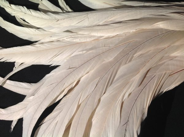 Ivory White Rooster Feathers