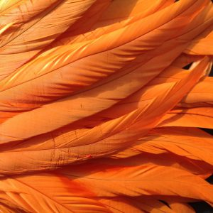 Bright Orange Rooster