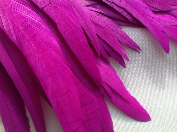 Byzantine Purple Rooster Feathers