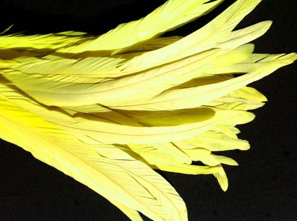 Lemon Yellow Rooster