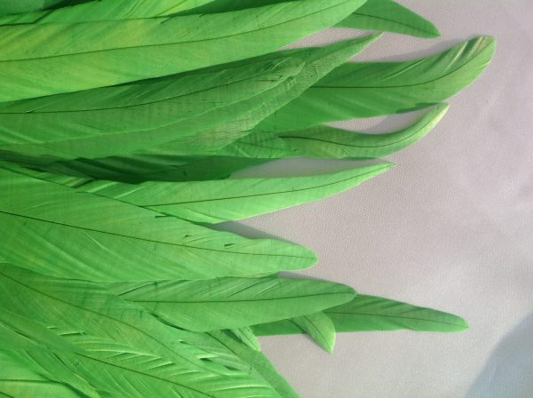 Lime Green Rooster Feathers