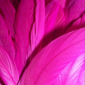 Neon Pink Rooster Feathers