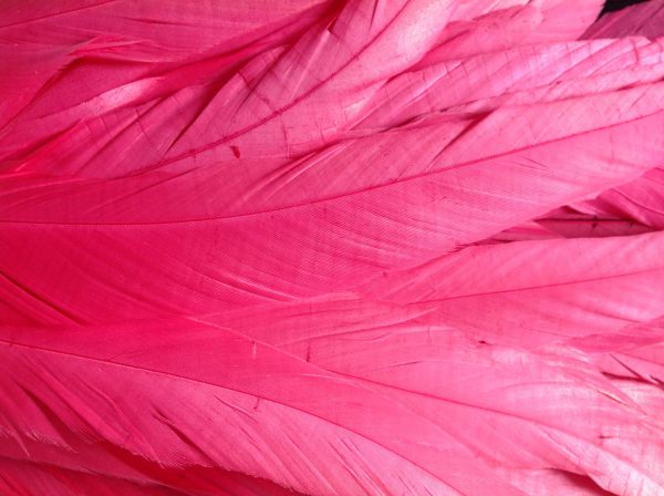 Bright Pink Rooster Feathers