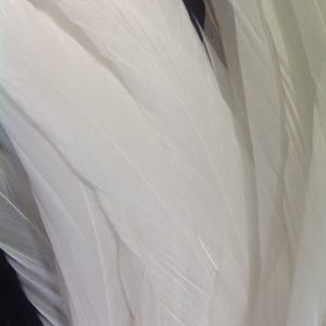 Pure White Rooster Feathers