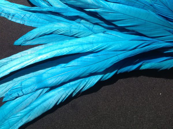 Turquoise Rooster Feathers