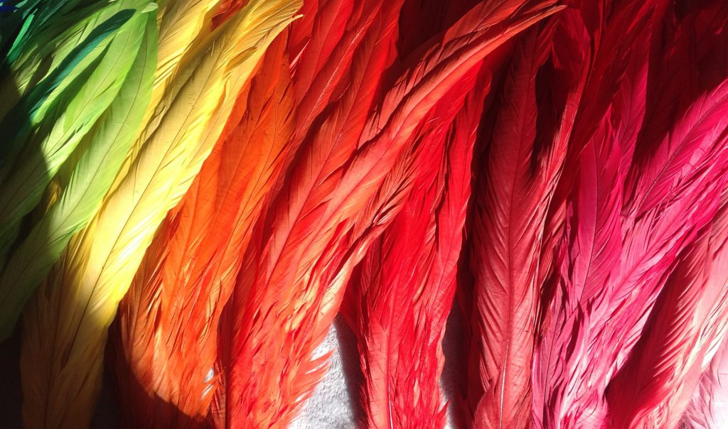 Multicoloured Rooster feathers
